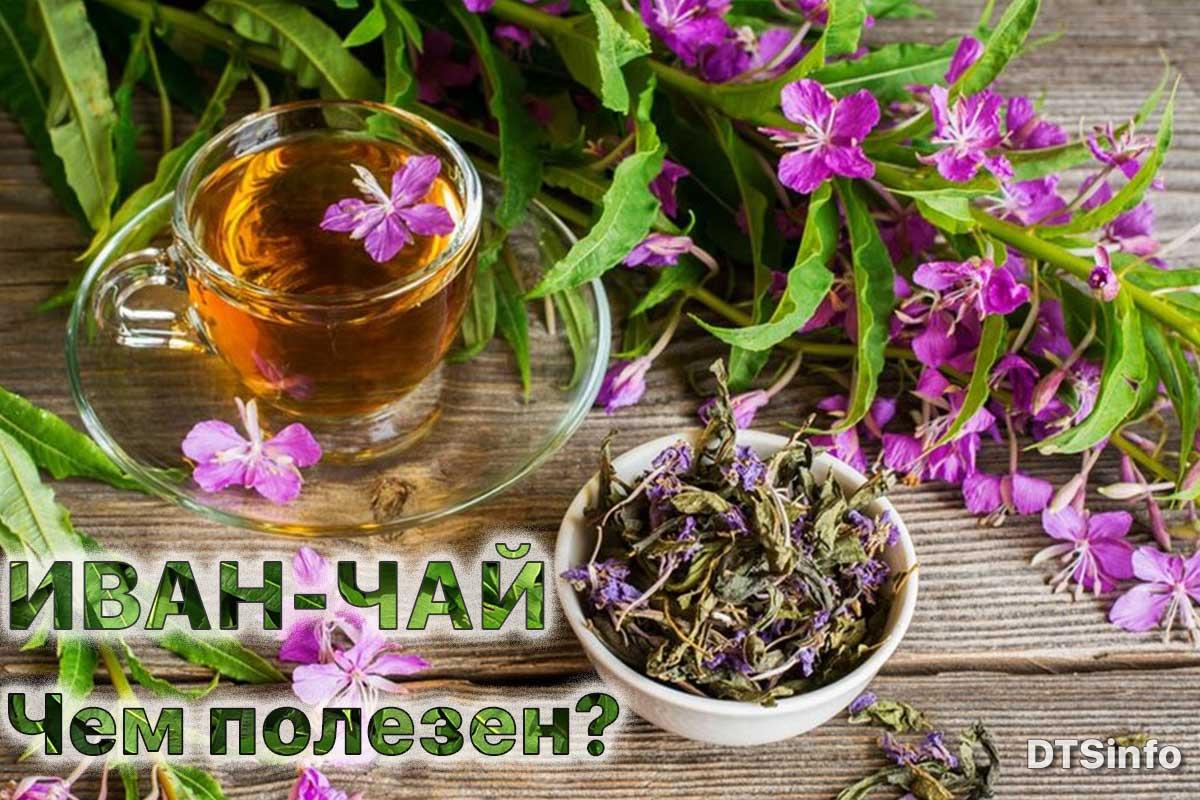 Read more about the article Иван-чай или кипрей узколистный: польза и вред